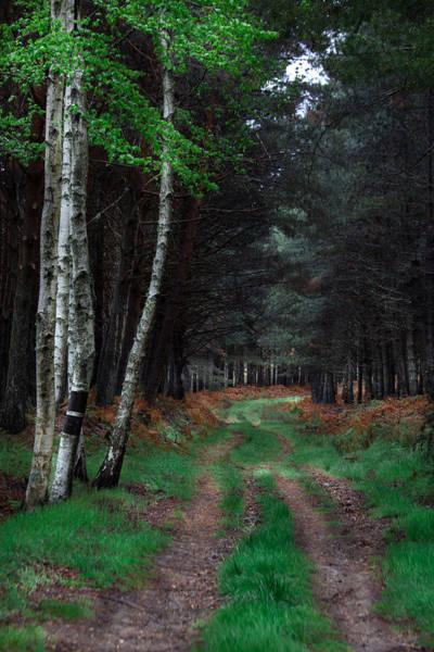 Photograph - Green Carpet by Edgar Laureano