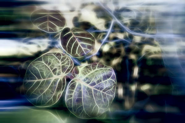 Photograph - Green Caviar by Evie Carrier
