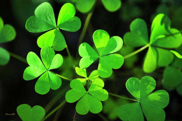 Photograph - Green Clover by Christina Rollo