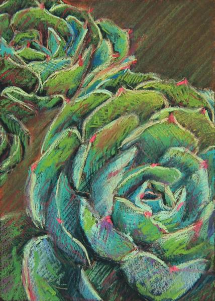 Succulent Wall Art - Painting - Green Echeveria by Athena Mantle