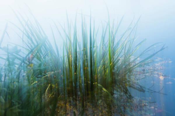 Photograph - Morning At The Lake by Yulia Kazansky