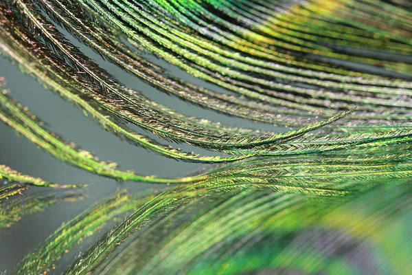 Photograph - Green Feather Strands by Angela Murdock