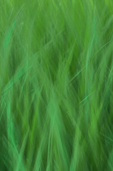 Photograph - Green Fire 8 by Brad Koop