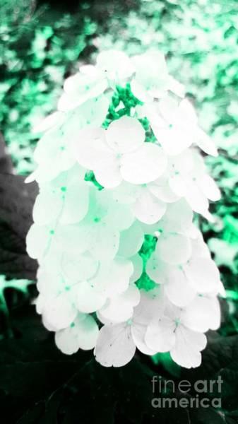 Photograph - Green Flower Puff by Rachel Hannah