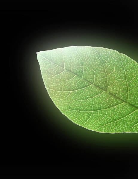 Greetingcards Photograph - Green Glow by Johanna Hurmerinta