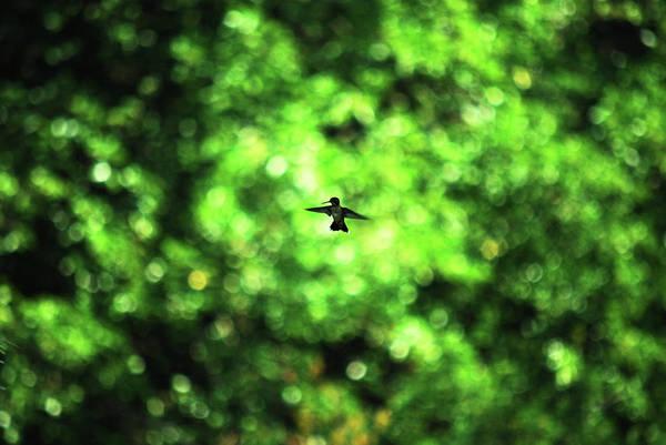 Photograph - Green Glow by Lori Tambakis