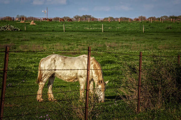 Photograph - Green Grass Grazing by Melinda Ledsome