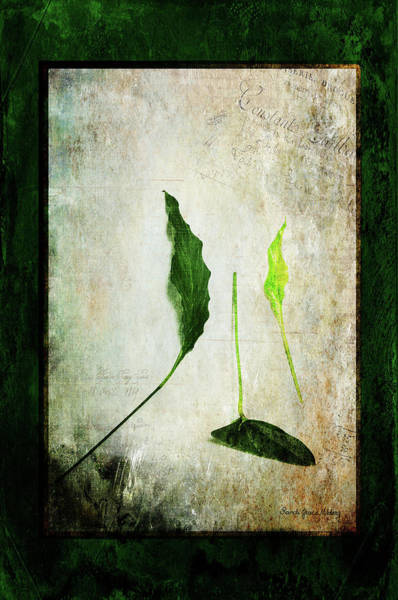 Photograph - Green Harmony by Randi Grace Nilsberg