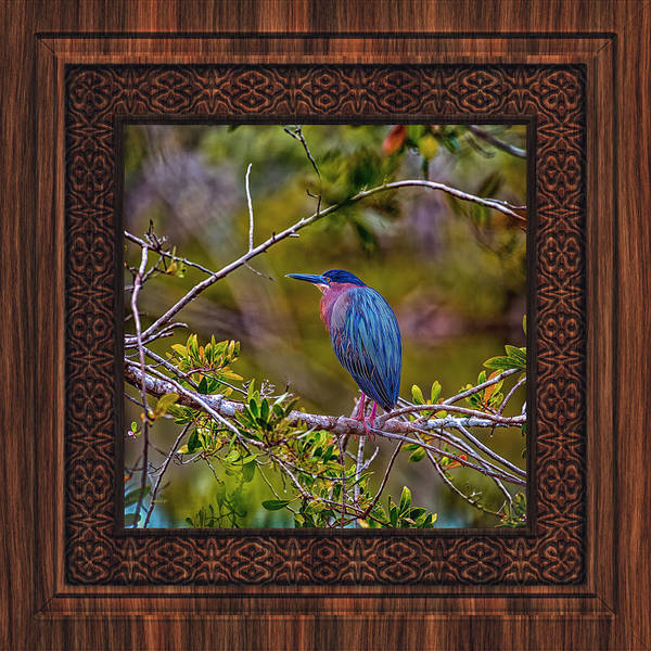 Photograph - Green Heron In A Wood Frame by John M Bailey