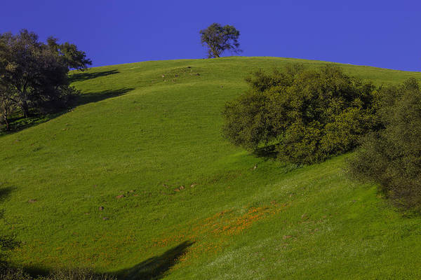 Hillside Photograph - Green Hill With Poppies by Garry Gay
