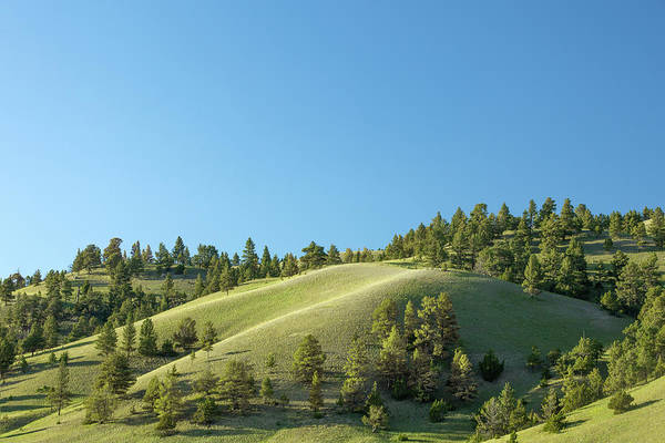 Foothills Wall Art - Photograph - Green Hills by Todd Klassy