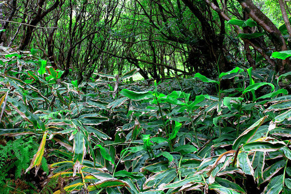 Photograph - Green Island by Edgar Laureano
