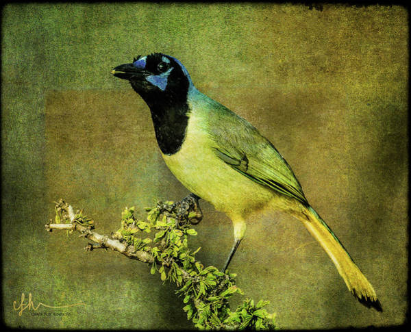 Digital Art - Green Jay With Textures by Carol Fox Henrichs