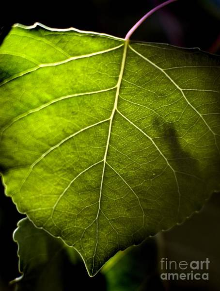 Photograph - Green Leaf Detail by Norman Andrus