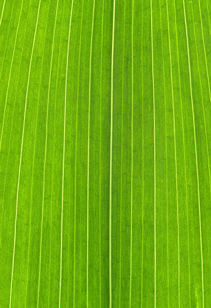 Wall Art - Photograph - Green Leaf by Frank Tschakert