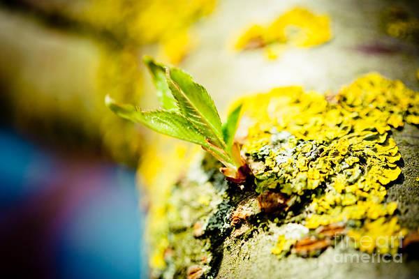 Photograph - Green Leaf by Raimond Klavins