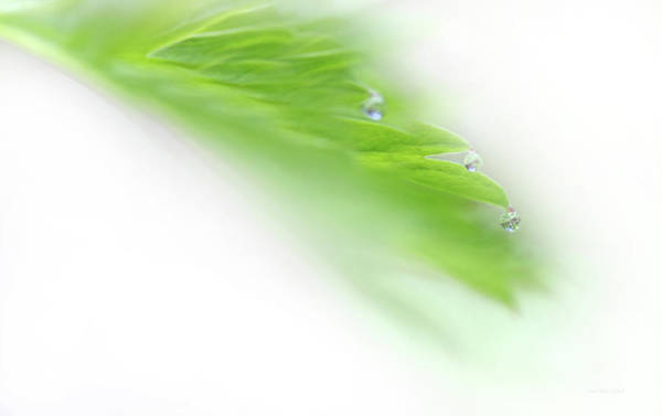 Wall Art - Photograph - Green Leaf With Water Drops by Jennie Marie Schell