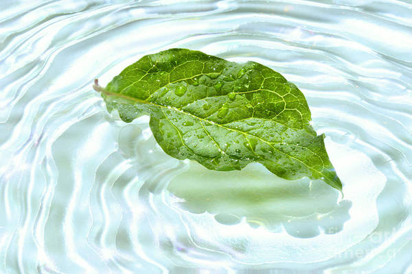 Wall Art - Photograph - Green Leaf With Water Reflection by Sandra Cunningham