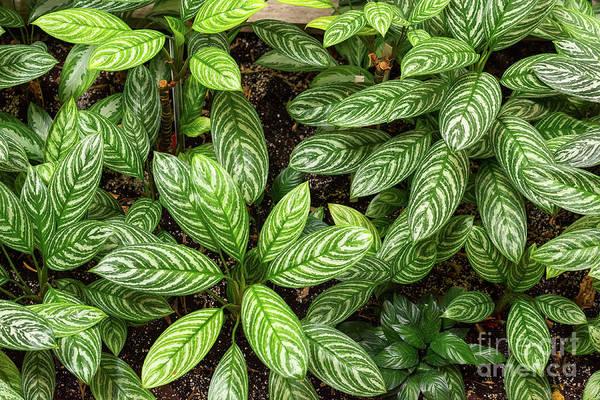 Photograph - Green Leafy Plants by Les Palenik