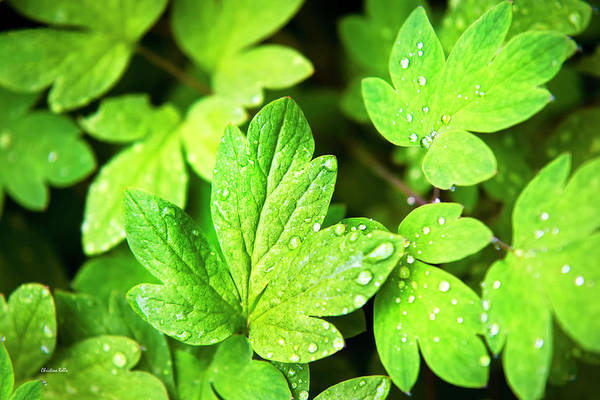 Photograph - Green Leaves by Christina Rollo