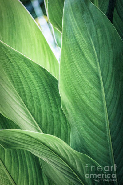 Photograph - Green Leaves No. 2 by Todd Blanchard