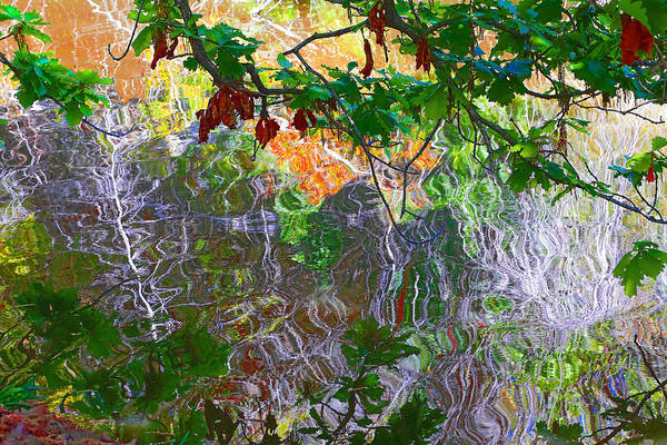 Photograph - Green Leaves Over Water by Viktor Savchenko