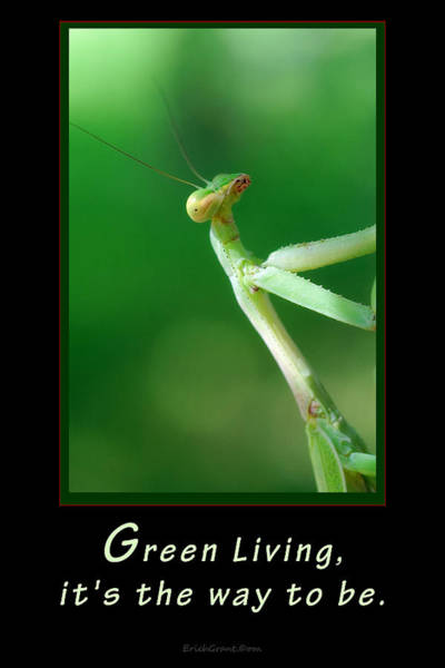 Photograph - Green Living by Erich Grant