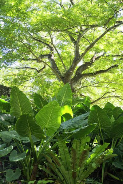Allerton Garden Photograph - Green Magic by Candace Freeland
