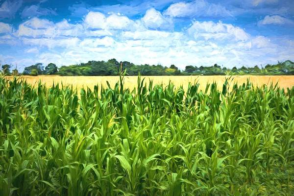 Photograph - Green Maize Field And Blue Sky by John Williams