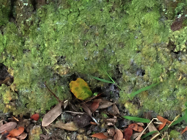 Photograph - Green Man Spirit Photo by Gina O'Brien
