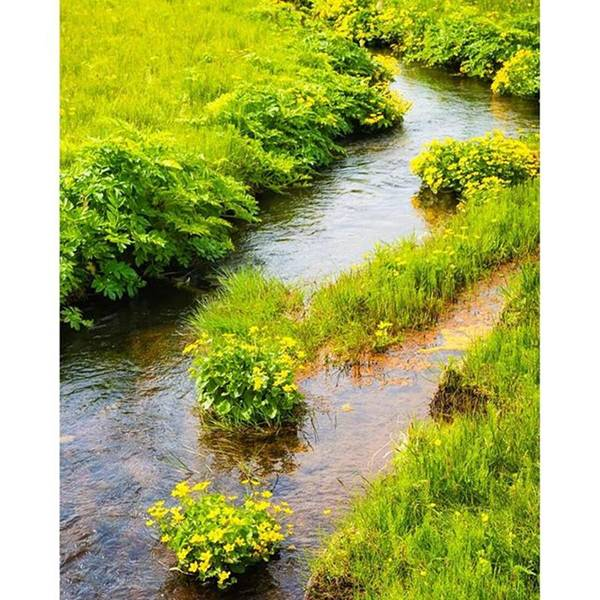 Wall Art - Photograph - Green Meadow And Lovely Little River by Matthias Hauser