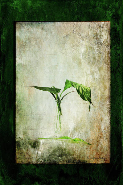 Photograph - Green Melancholy by Randi Grace Nilsberg