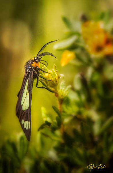 Photograph - Green Moth In The Green Meadow by Rikk Flohr