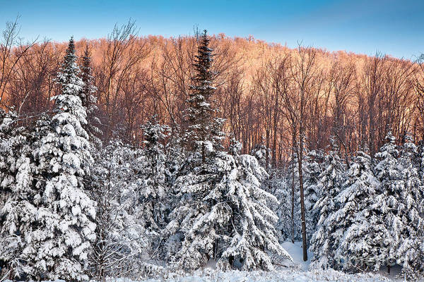 Photograph - Green Mountain Winter Sunrise by Susan Cole Kelly