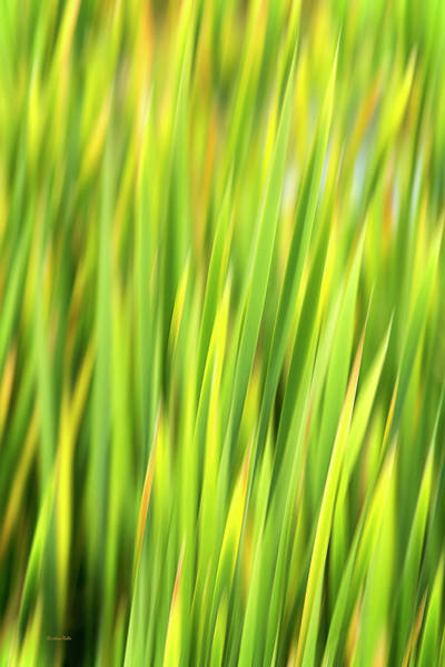 Photograph - Green Nature Abstract by Christina Rollo