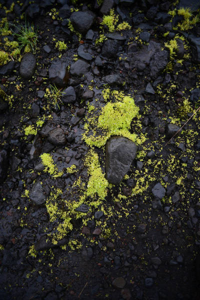 Green On Black On Iceland's Fimmvorduhals Trail Art Print