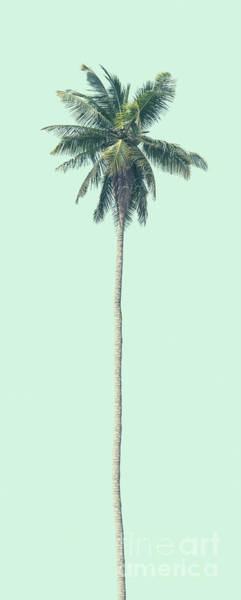 Wall Art - Photograph - Green Palm by Andrew Paranavitana