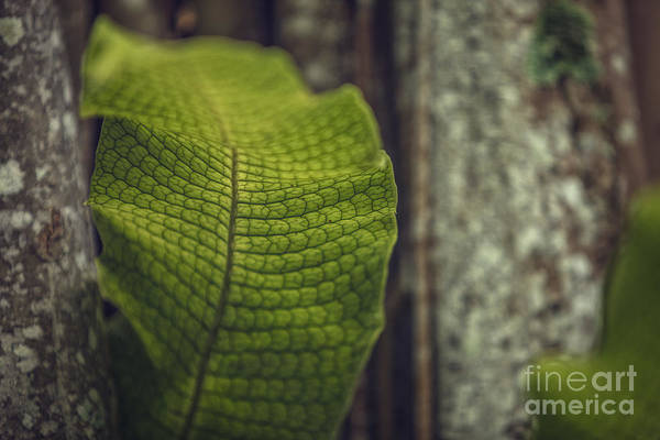 Photograph - Green Patterns by Tim Wemple