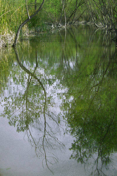 Green And Gray Photograph - Green Peace - Trees Reflection by Ben and Raisa Gertsberg