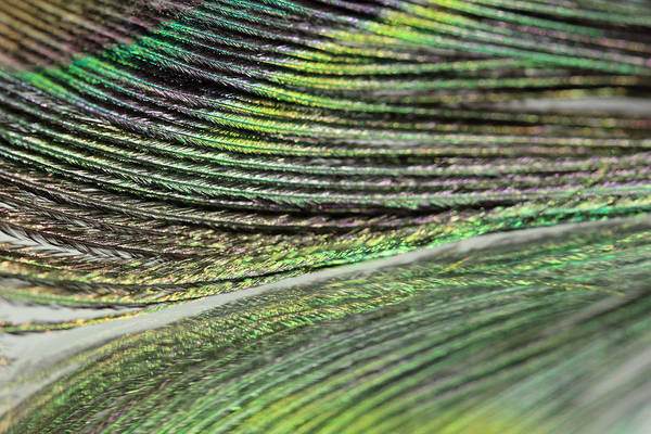 Photograph - Green Peacock Abstract by Angela Murdock