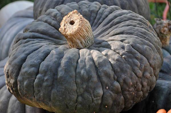 Photograph - Green Pumpkin by Teresa Blanton