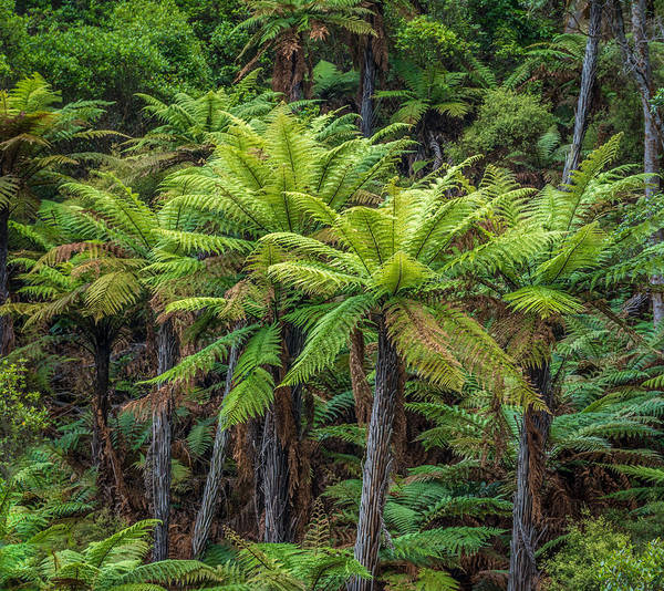 Photograph - Green  by Racheal Christian