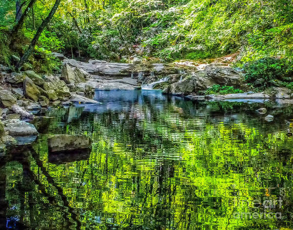 Photograph - Green Reflection In Cades Cove by Nick Zelinsky