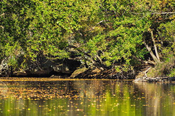 Wall Art - Photograph - Green Reflections by Bill Cannon