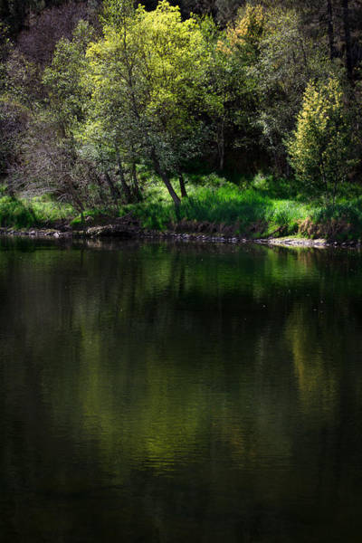 Photograph - Green Reflections by Edgar Laureano