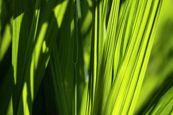 Photograph - Green by Robert Potts