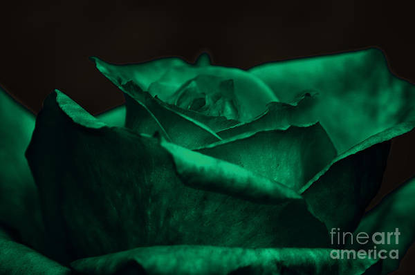 Photograph - Green Rose by Clayton Bruster