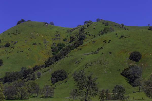 Wall Art - Photograph - Green Sierra Foothills by Garry Gay