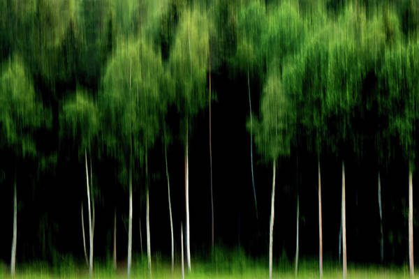 Wall Art - Photograph - Green Silence by Stelios Kleanthous