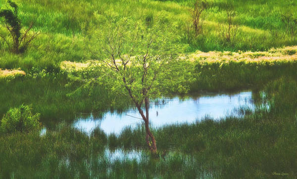 Photograph - Green Spring Pond And Twin Tree by Anna Louise